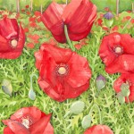 Poppy Fields Watercolor Painting